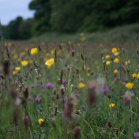 Comment les entreprises bio peuvent-elles mieux prendre en compte la biodiversité ?